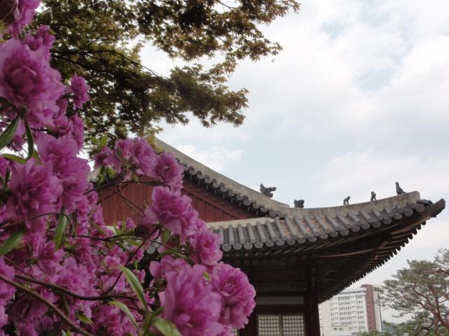 2013年5月2日 昌慶宮1