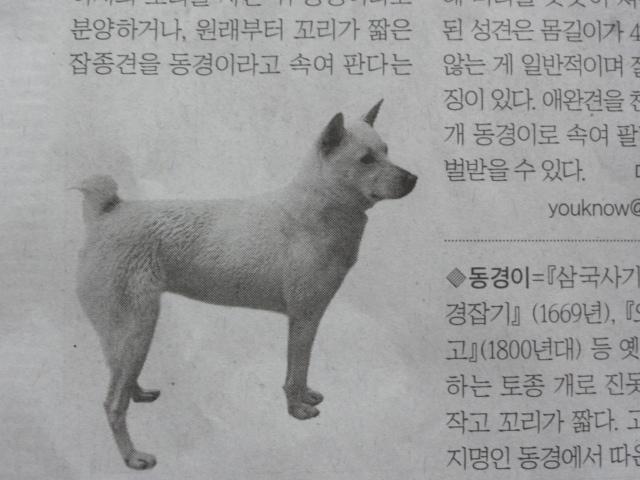 2013年7月1日 東京犬