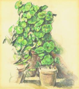 geraniumus.jpg