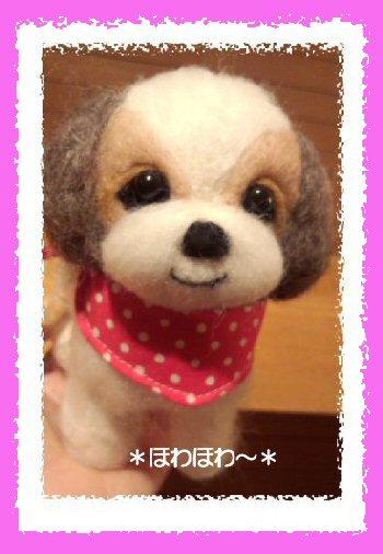 シーズーちゃん 女の子1