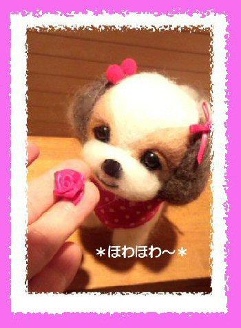 シーズーちゃん 女の子4