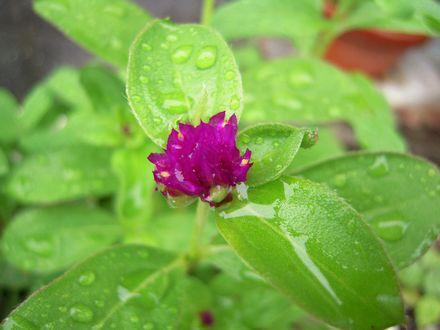 unknown flower 20100711_02s