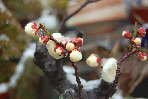 snow 20110211_09s
