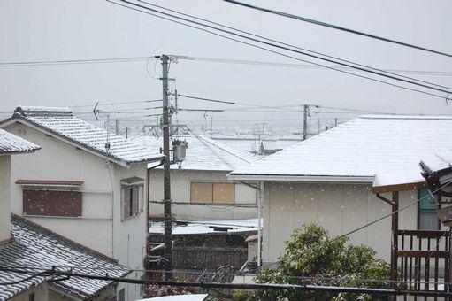 snow 20110211_02s