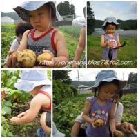 野菜収穫。