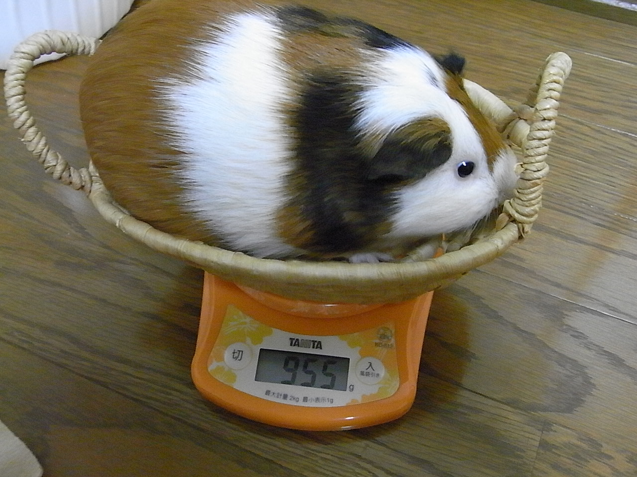 体重1022