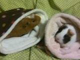 かとこさんちの胡桃ちゃん(左)と小春ちゃん(右)
