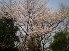 2011_04_18_03.jpg