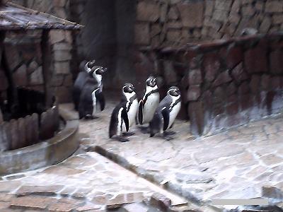 江戸川区自然動物公園ペンギン