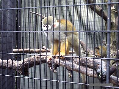 江戸川区自然動物公園リスザル