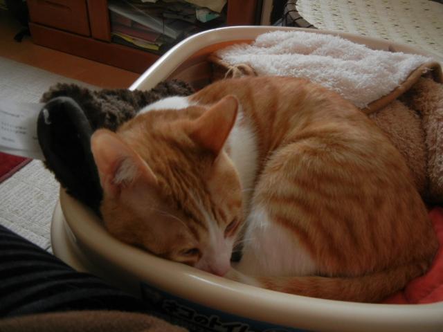 簡易ベッドでお休みモード