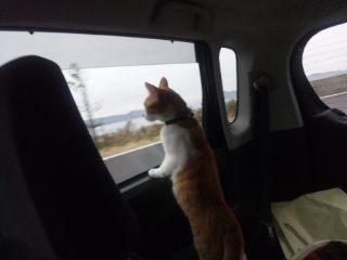 ドライブ満喫中