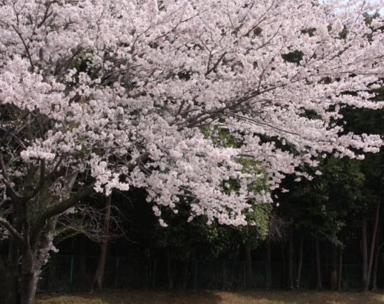 fudoki03_20120413184309.jpg