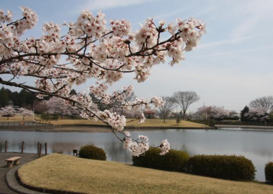 kasiwabara01_20120413175819.jpg