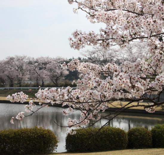 kasiwabara03_20120413175816.jpg