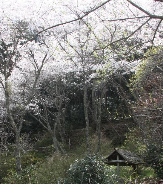 satoyama05.jpg