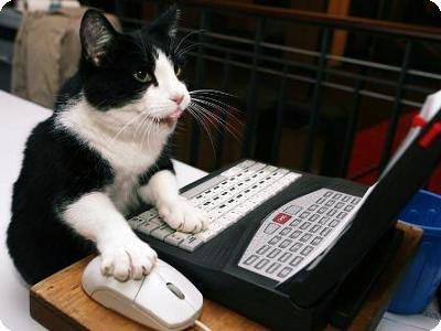 ネコとパソコン