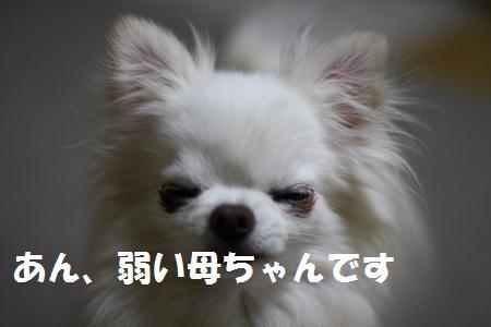 IMG_2157.jpg