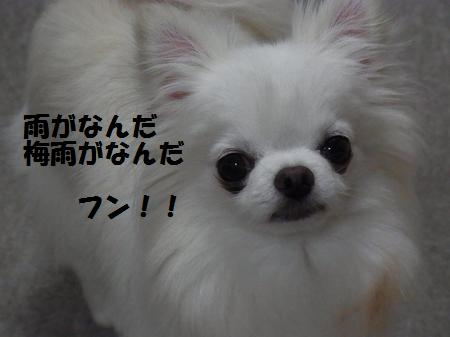 RIMG0401.jpg