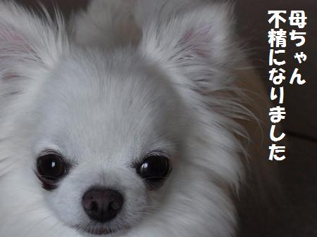 RIMG0431_20110713072642.jpg