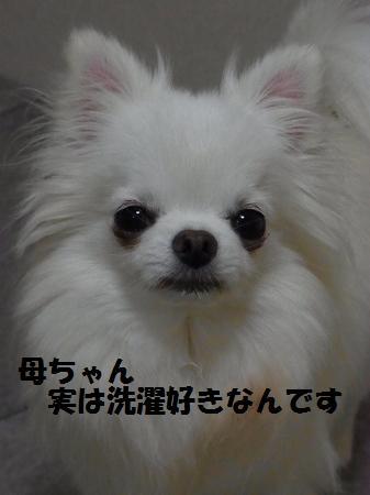 RIMG0676.jpg