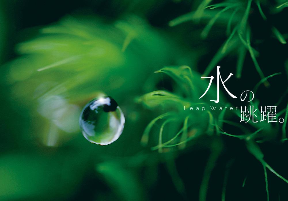 LeapWater_take01.jpg