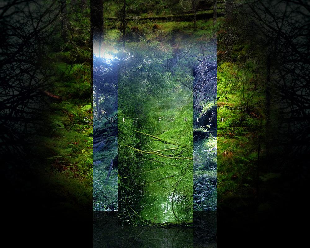 forest0001.jpg