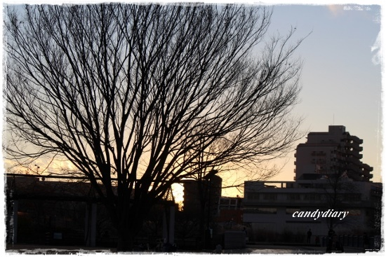 IMG_4019 (550x367)