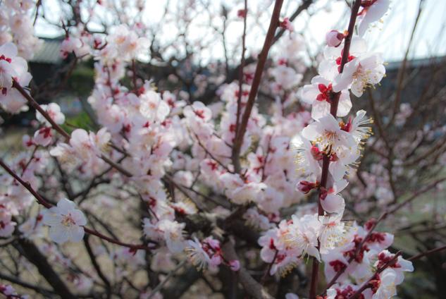 2011-03-14_4790.jpg