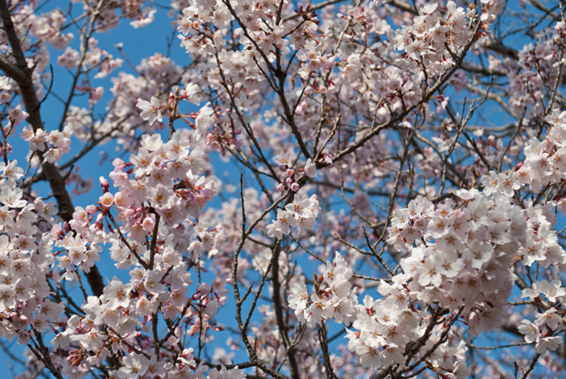 2011-03-28_5889.jpg