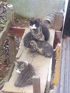 おねぇの実家の庭で、4匹兄弟の1匹として生まれる。