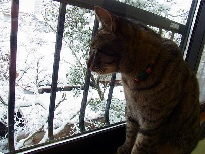 おへやごと雪の国に来たにゃ?