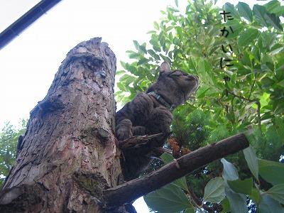 木登りゆべちゃん