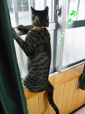 台風の窓辺にミーアキャットが!