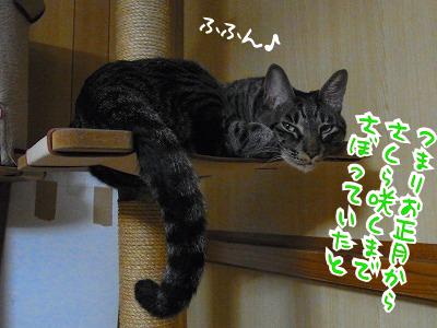 チシャ猫っぽいゆべ