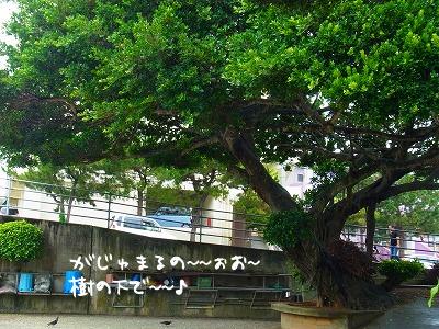 うちのアパートの駐車場には、大家さんが丹精こめた大きながじゅまるの樹がありまして