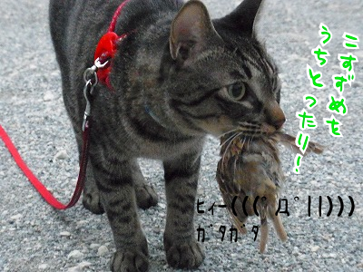 ひぃぃぃぃぃ((((;゚Д゚))))