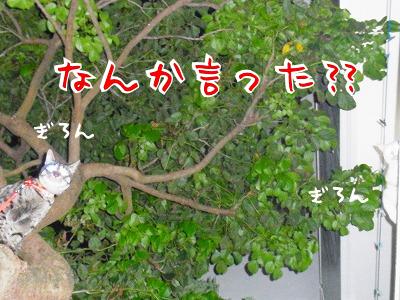 バルコニーと木の上からロミオをジュリエットみたいねー
