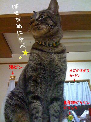 はきだめにゆべc⌒っ*`・ω・)っ
