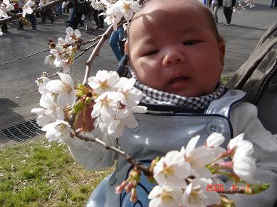 2006 hanami