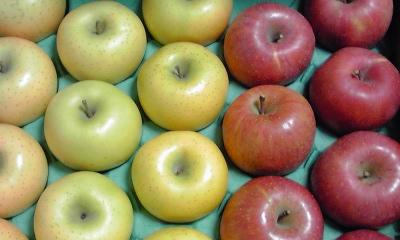 つやぴか完熟りんご!