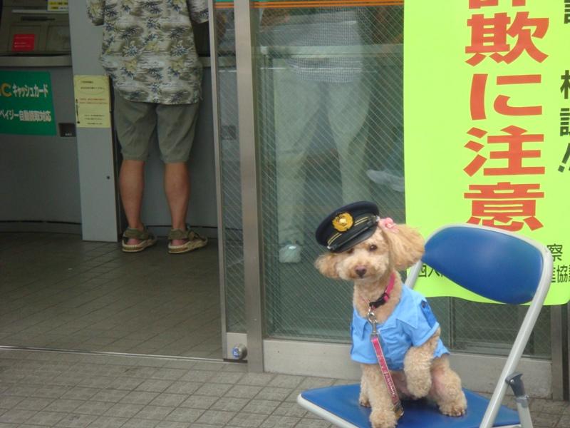 画像犬のおまわりさん  振り込め撲滅キャンペーンイン2010.8.13 021