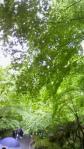 NEC_0583.jpg