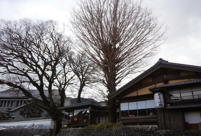 大きな樹木がシンボル