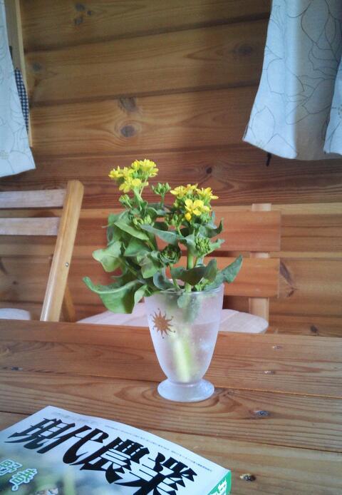 この花の正体は