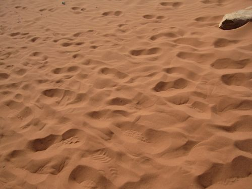 wadi2