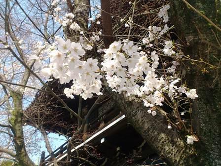 京都散歩5