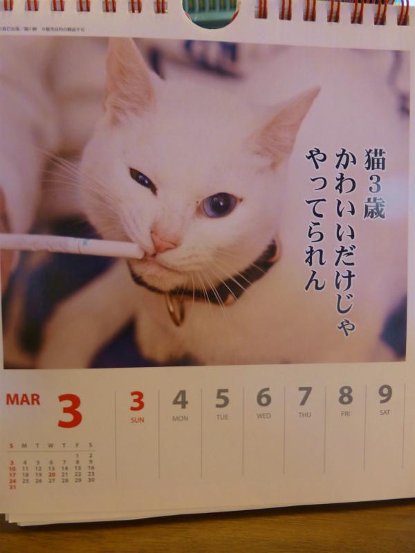 猫三歳(25年3月6日)