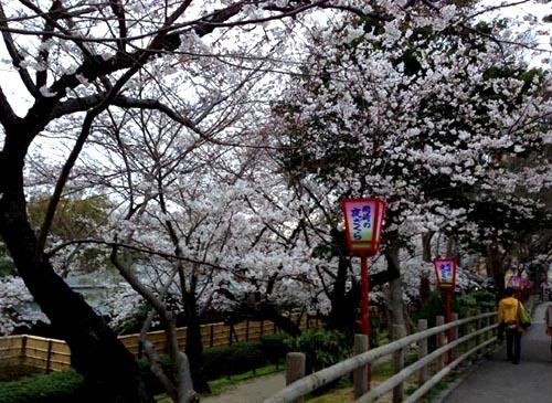 28_sakura_2.jpg