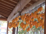秋の風物詩「吊るし柿」1